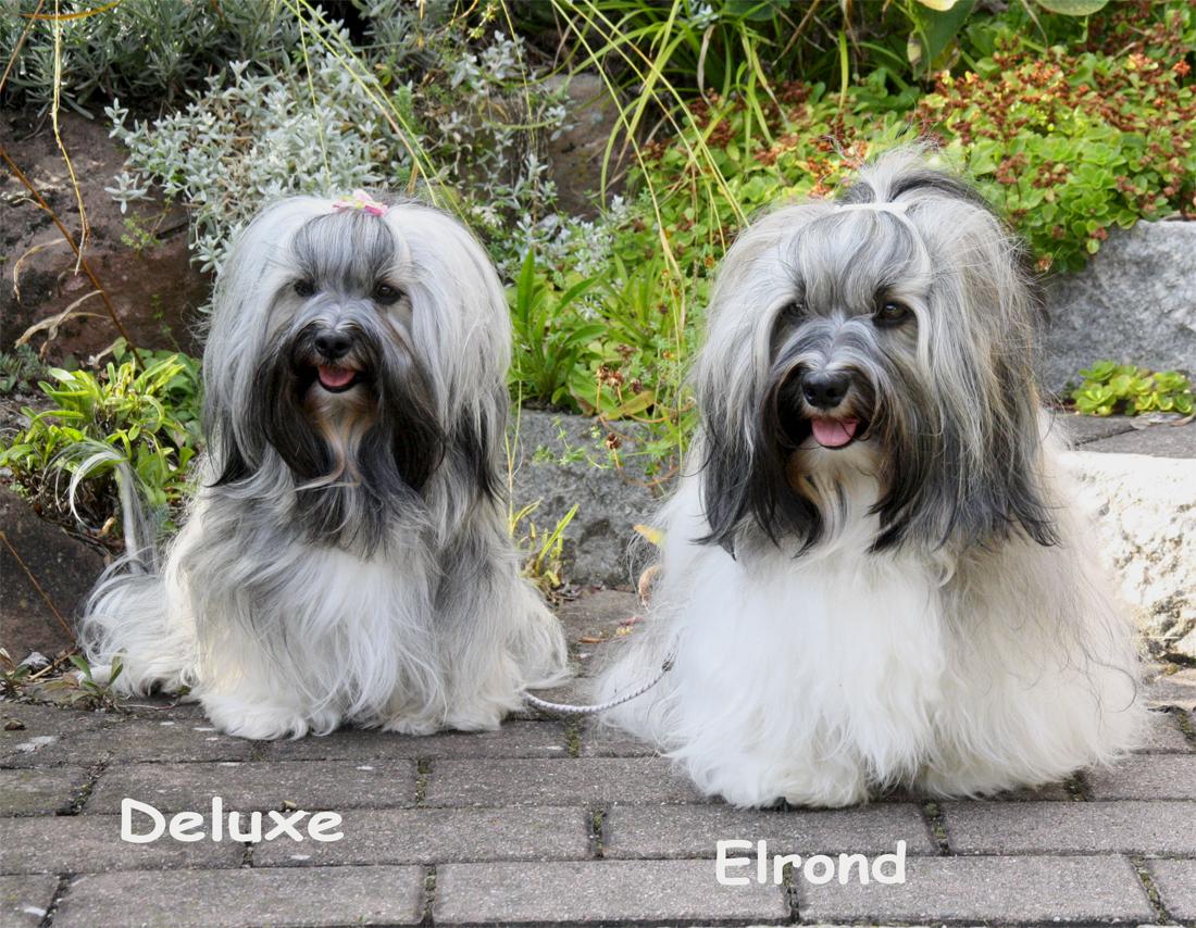 Deluxe und Elrond