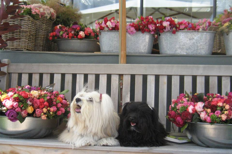 Diego und Anevay.jpg
