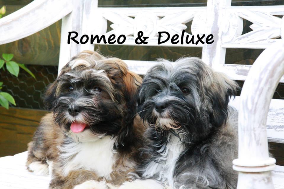 Romeo und Deluxe.jpg