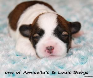 Amicella&Louis1