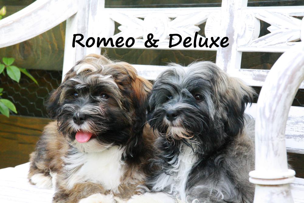 Romeo+Deluxe