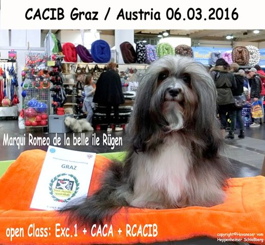 Graz 2016 Romeo