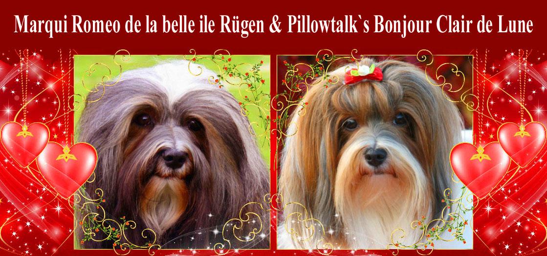 Romeo und Lilli, Havaneser