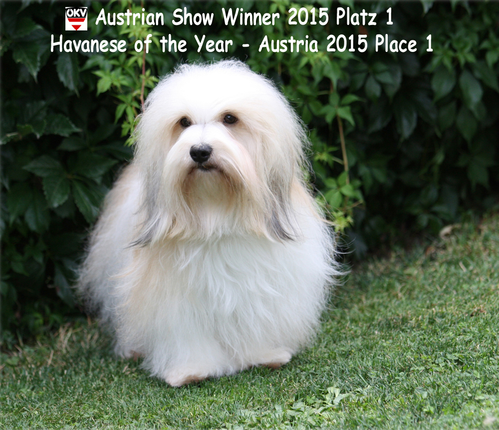juliette-show-winner-neu