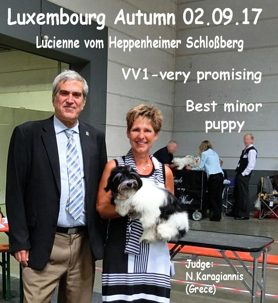 Luxembourg 2-17 Havaneser