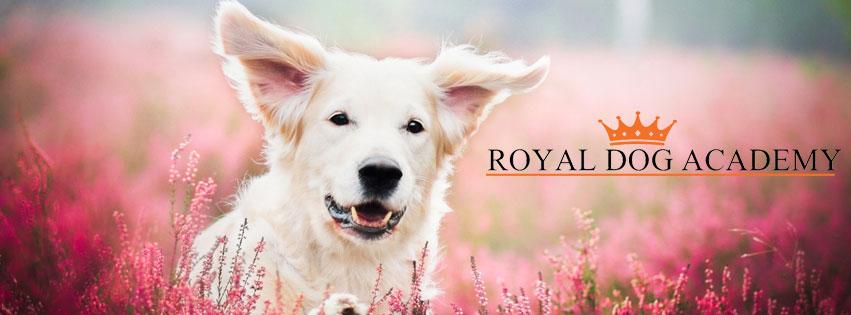 royaldogacademy-header